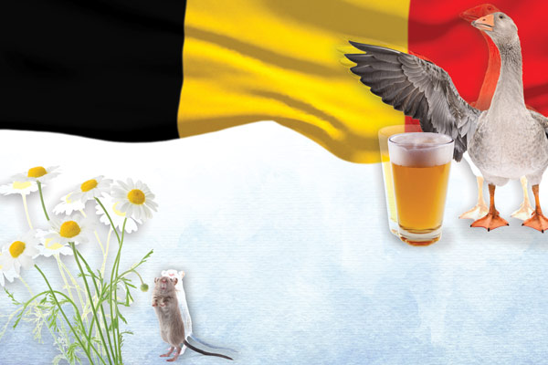 healthy-belgian-beer-mj2021