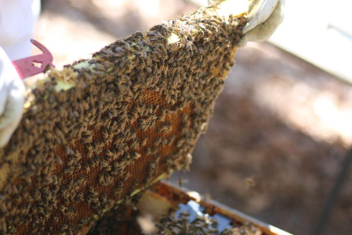 bee-hive-frame-mead