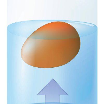 Egg Hydrometer